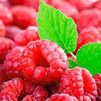 Чим корисні ягоди: полуниця, чорниця, малина, ожина?